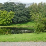 Lush greenery and a small pond in The Hague on one of my walks with our dog Oli