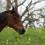 photo of a horse on www.adventuresinexpatland.com