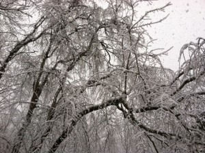 Ice-Kissed Branches on www.adventuresinexpatland.com